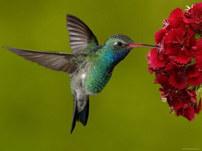 WHEN YOU SEE A HUMMINGBIRD, A BELOVED SOUL WAS VISITING YOU.