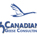 5 Canadian Geese (@5CanadianGeese) Twitter