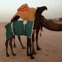سلمان الدوسري (@0540574435) Twitter