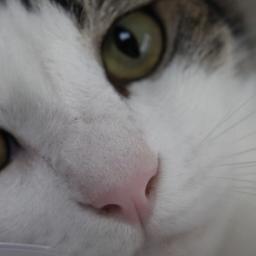 白猫ヤマトの宅急便 Sironeko353 Twitter