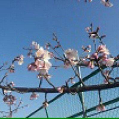 こんばんは〜(^O^)/ 10/27 17:45 東京都下は気温15.4℃湿度65% 夕焼け空に黒く浮かぶ富士山とお月様(⌒▽⌒) 今日も一日お疲れ様でしたm(_ _)m 笑顔で楽しい金曜日の夜をお過ごしください(^-^)v… https://t.co/NljzU522d1