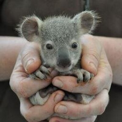 Baby Animals (@BBAnimals) Twitter profile photo