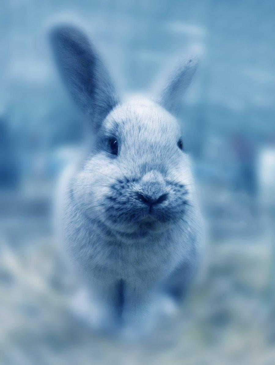 Blue Bunny (@johnBunny3)