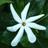 comolynn's avatar'