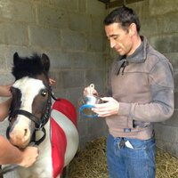 Davy Russell | Social Profile