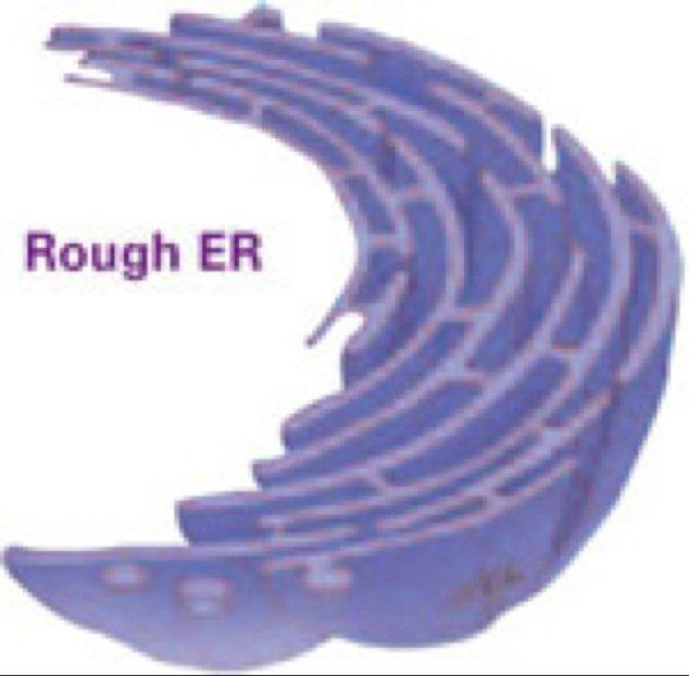 Eukaryotic Cells on emaze