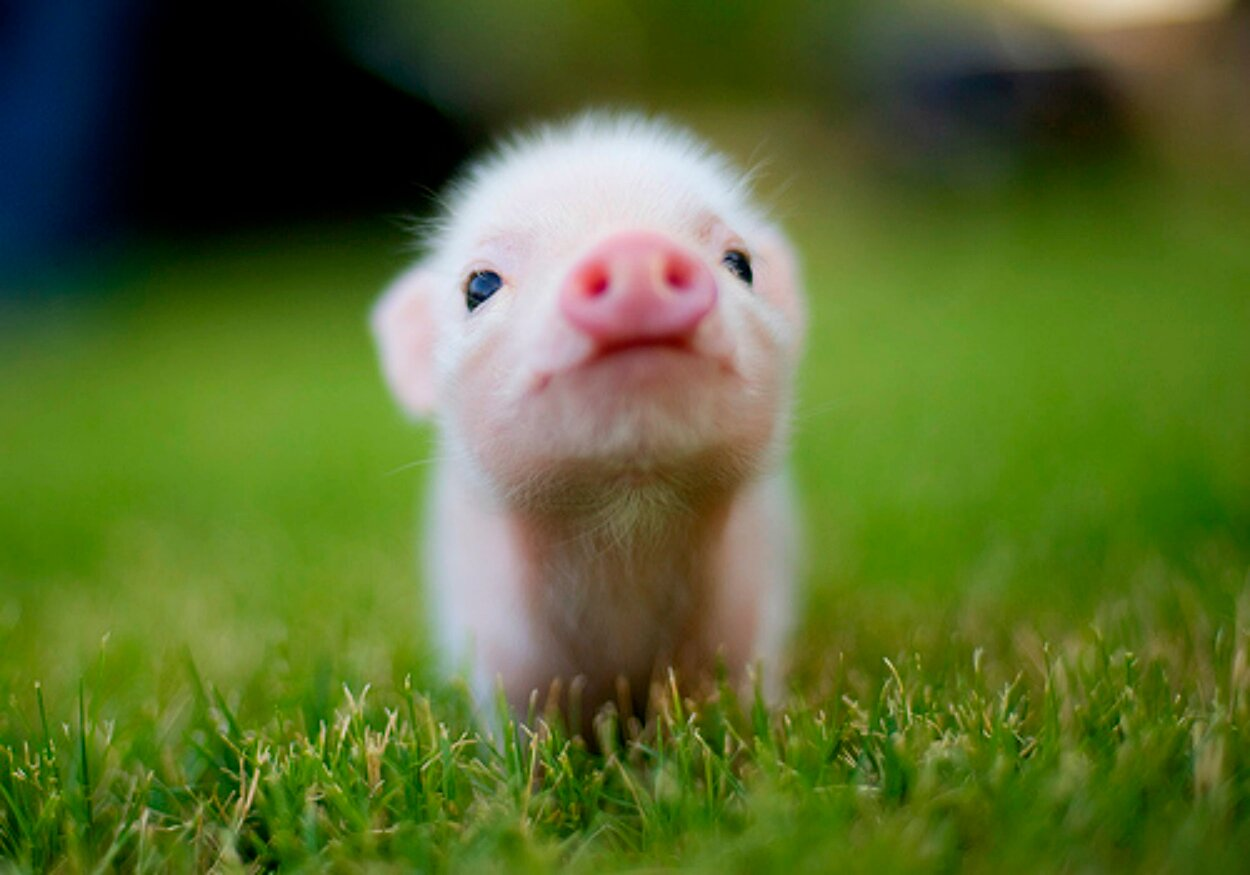 Baby Animal Pics