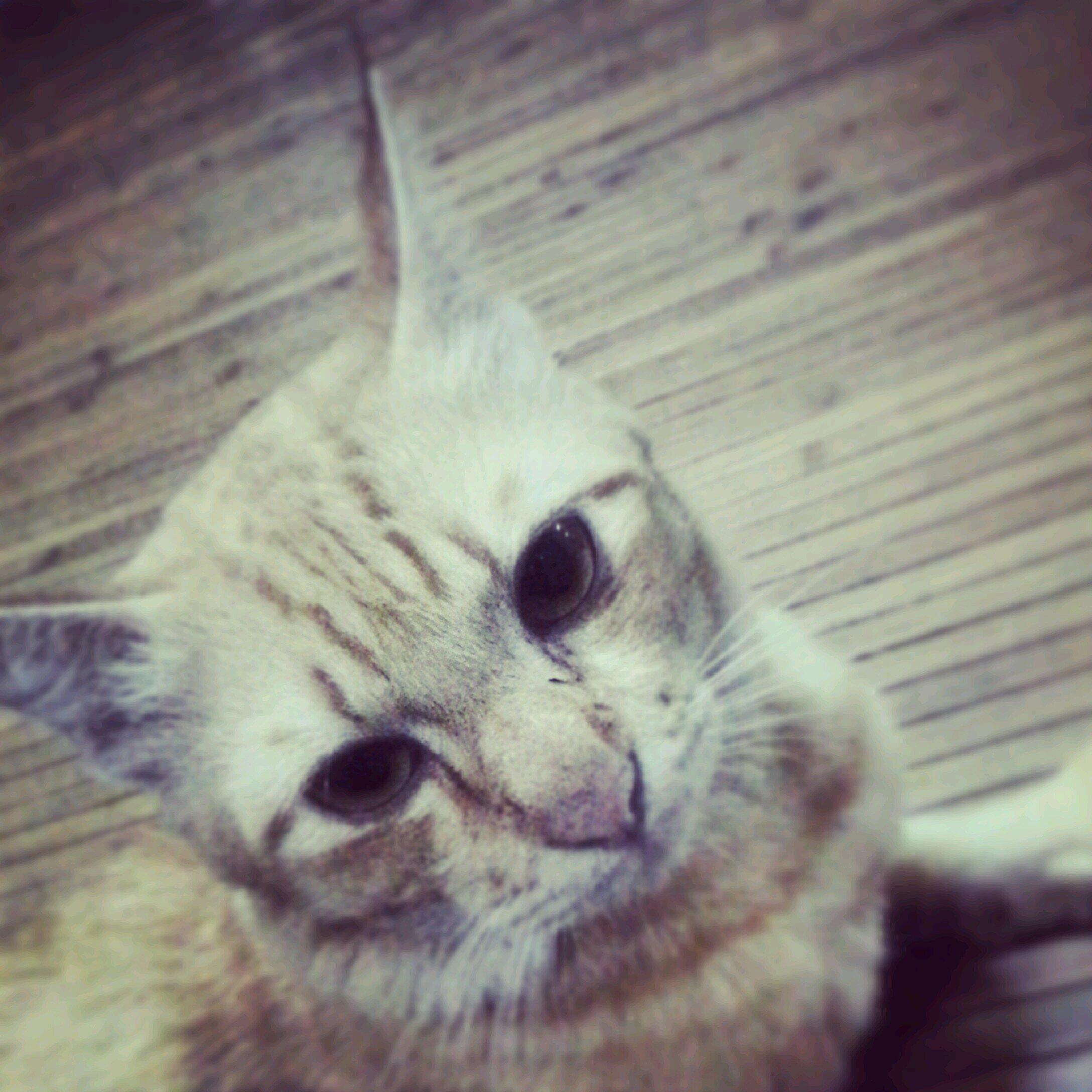 Download 66+  Gambar Kucing Gila Paling Lucu