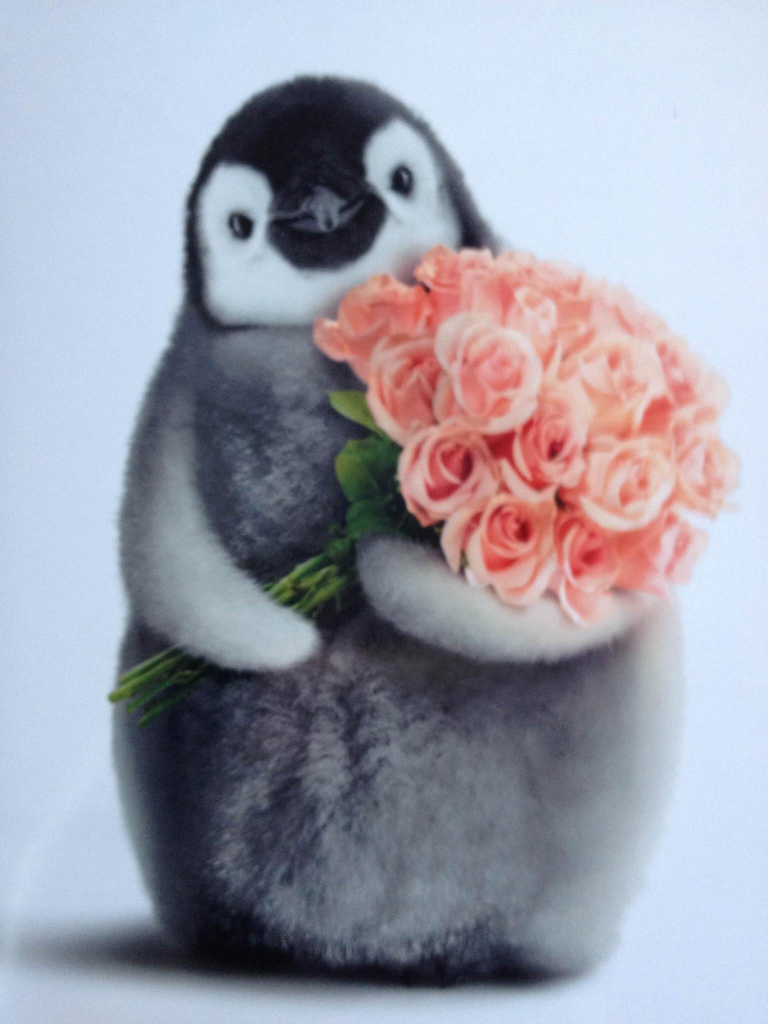 фото пингвинов с цветочками можно