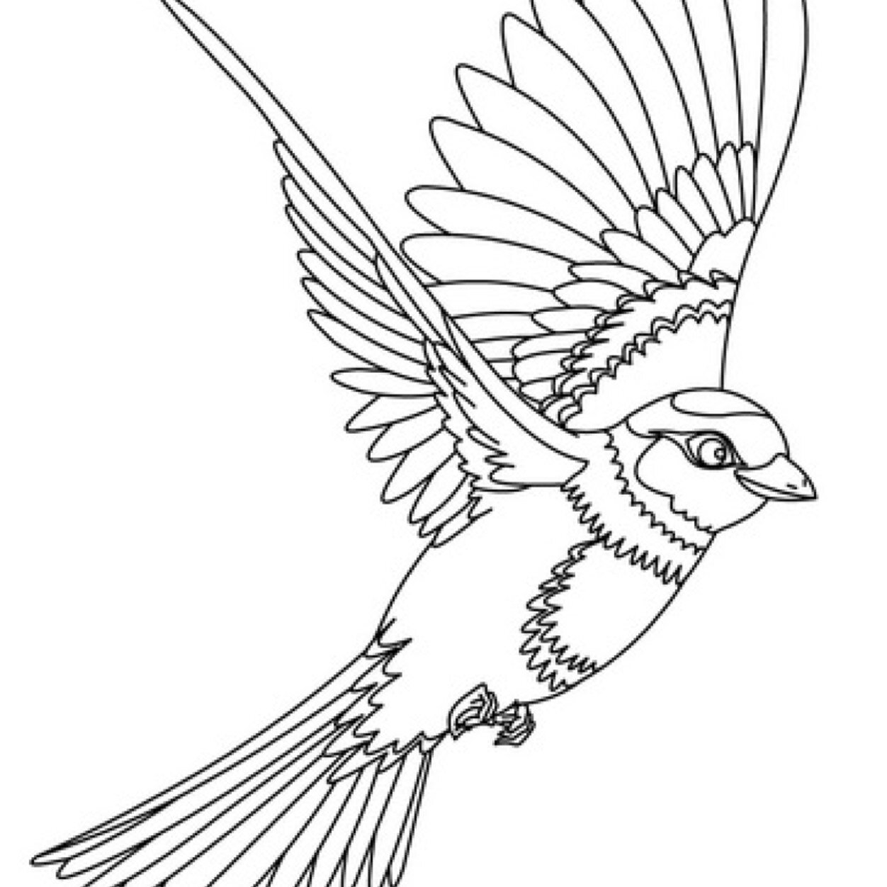 fawkes the phoenix coloring pages coloring pages