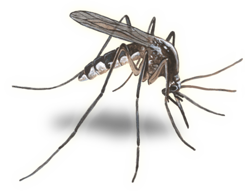 lemon grass research paper Our paper describes plant-based repellents for mosquitoes for personal  protection  repellent plants obtained through ethnobotanical studies,  development of new  keywords: mosquito repellent, lantana, calotropis, lemon  grass, tulsi and.