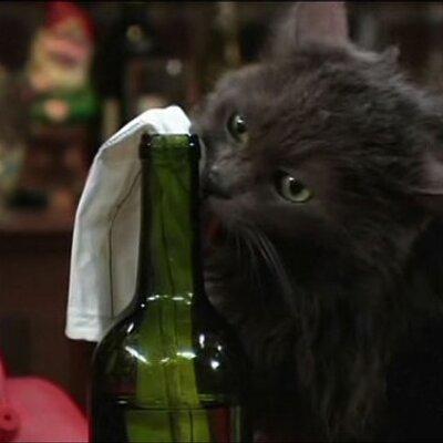 Agent Jack Bauer Cat Jack Bauer The Cat