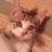 小竹勤@肉球新党「猫の生活が第一」 (@kinkin3)