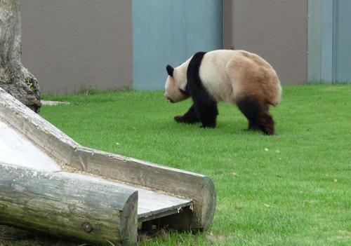 panda_2009
