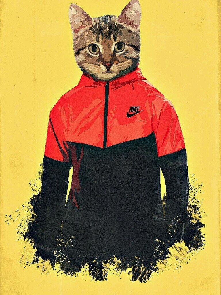 Картинки котика адидас