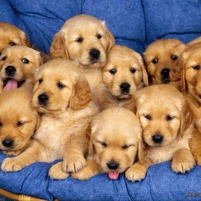 funny pupies