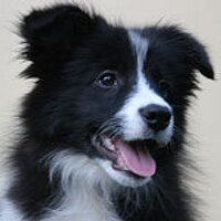 Border Collies | Social Profile