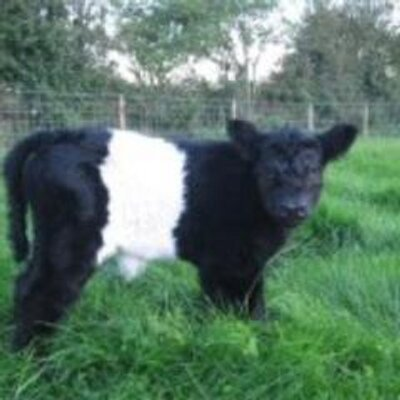 CLONBURREN BELTIES (@cbelties) Twitter profile photo