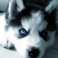 Puppy ShoutoutⓂ