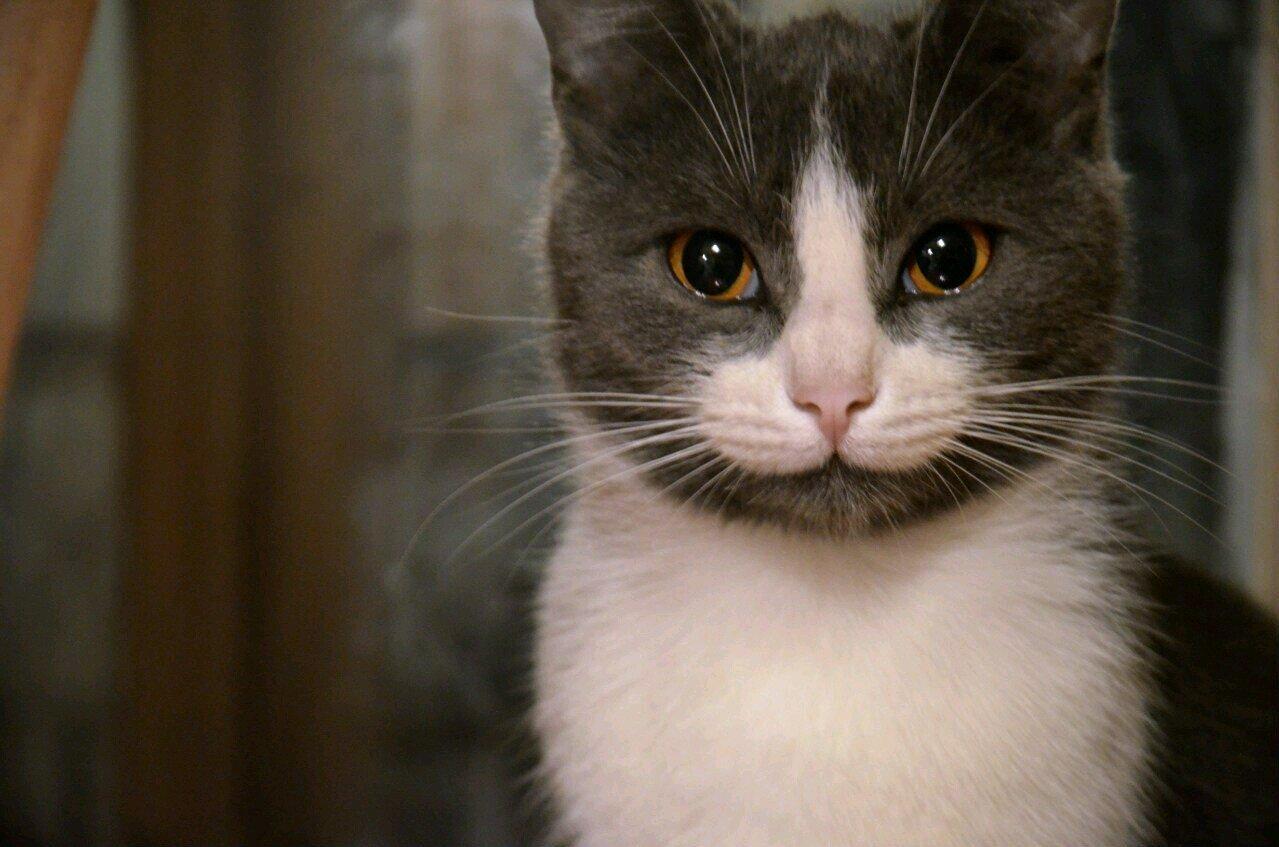 это слезы картинки с кошками этого эпифита является