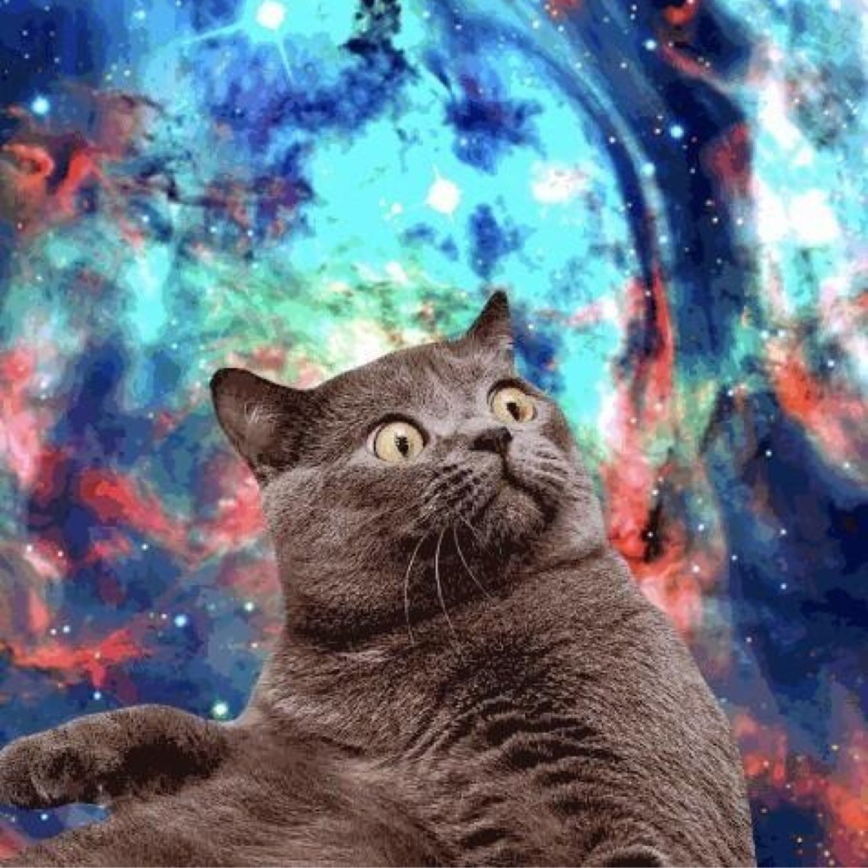Space Cats (@ItsSpaceCats) | Twitter