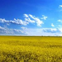 Ukrainolution