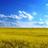 Free Ukraine 🇺🇦