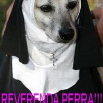 reverenda perra reverendaperra twitter