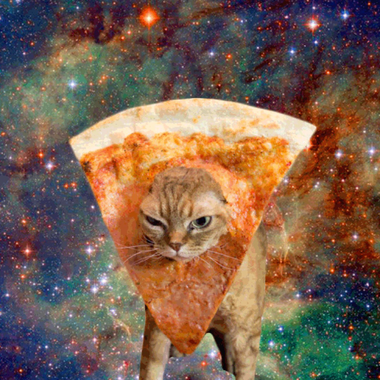 Cats In Space With Food