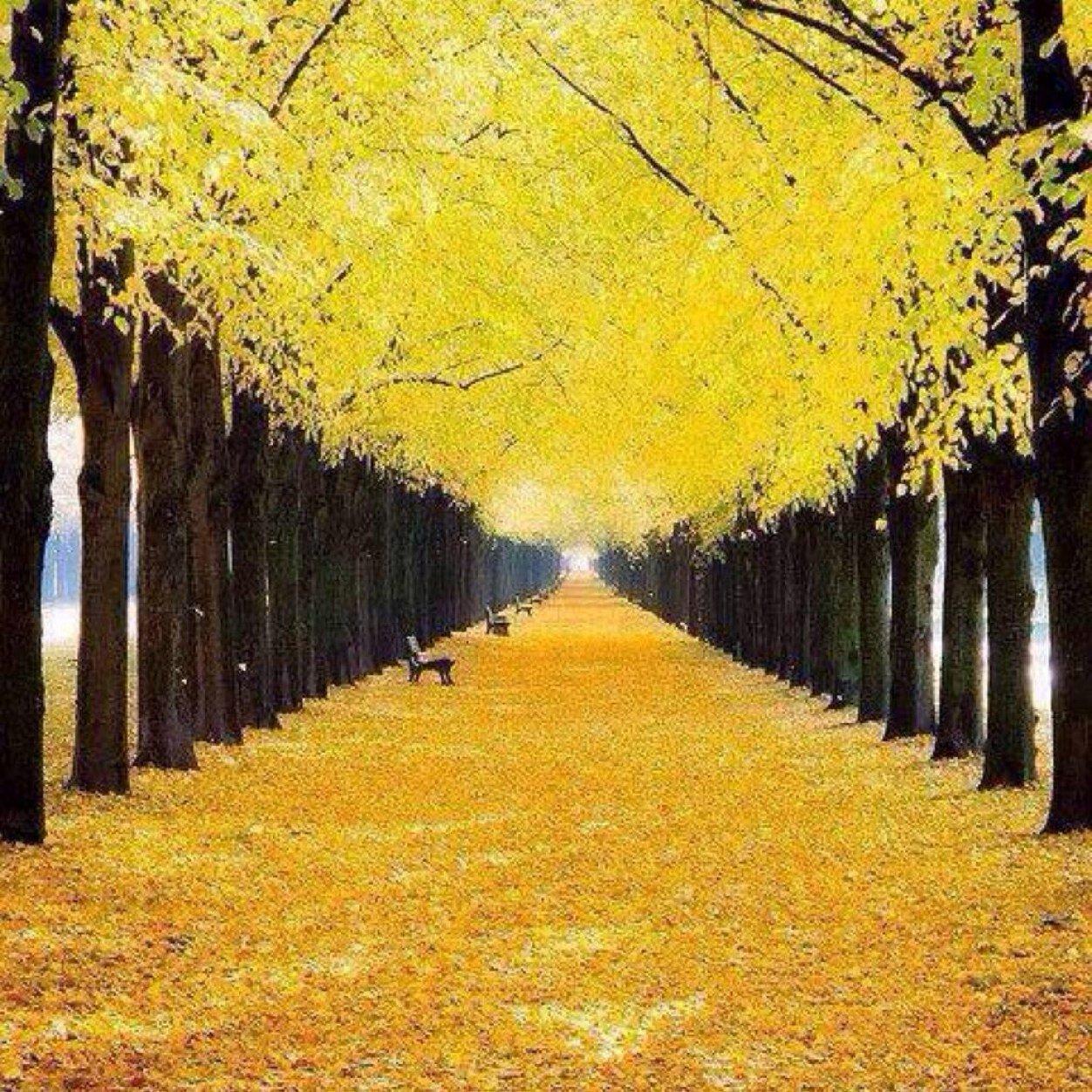 is it autumn yet autumn0 twitter rh twitter com