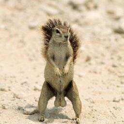 squirrel nutz squirrelnutz1 twitter