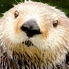 Ottersandsciencenews