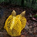 노란망태버섯(독버섯) (@1964yshyoo) Twitter