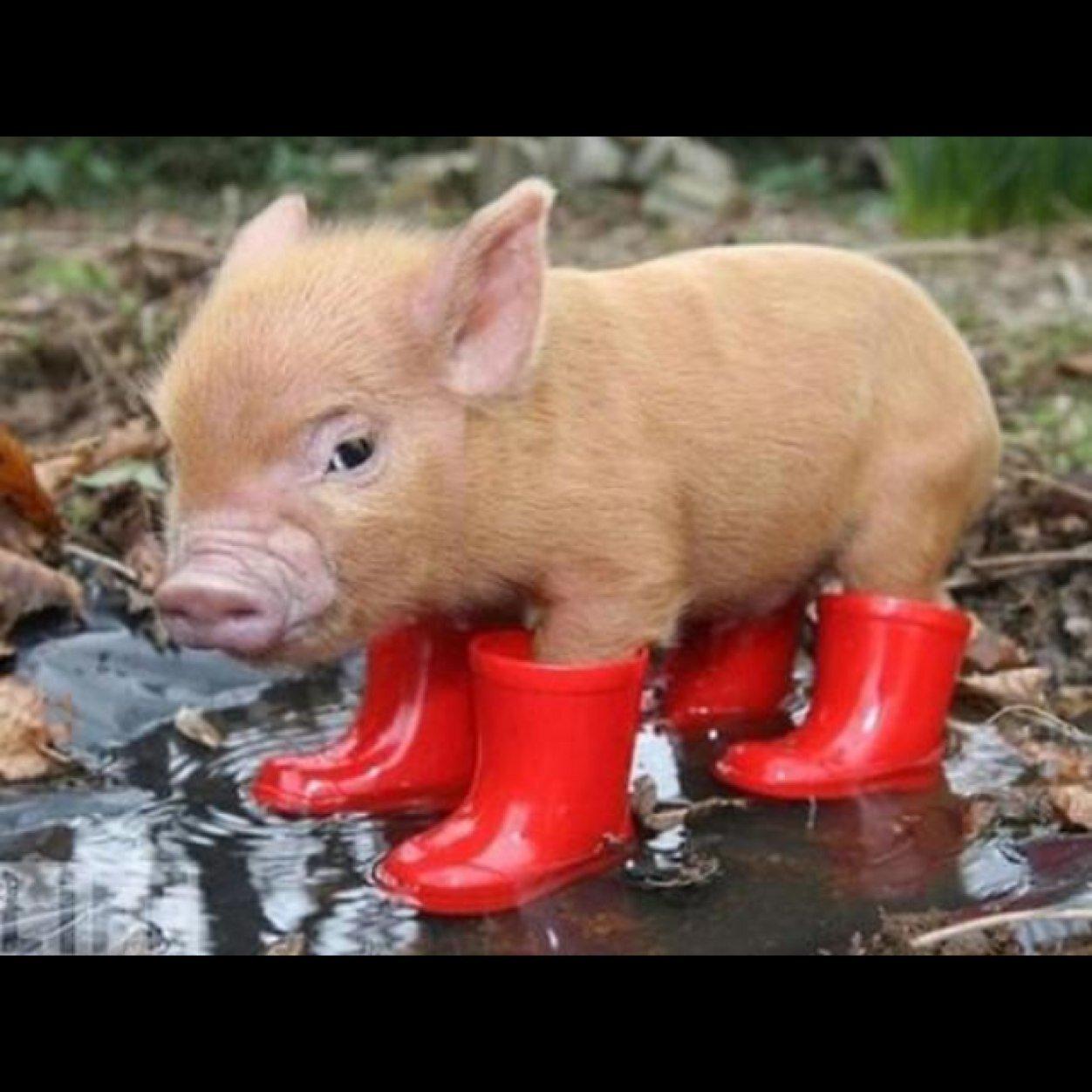 長靴をはいた豚の赤ちゃん