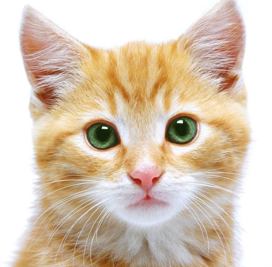 Hasil gambar untuk kucing