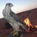 Abdulaziz El-rashedi (@2312El) Twitter