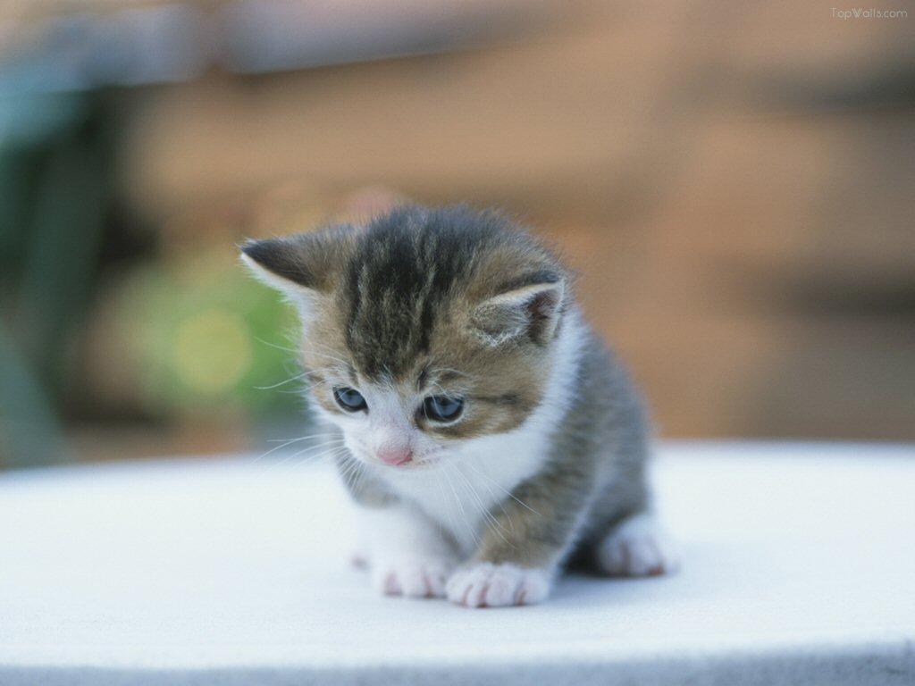 癒し猫の爪痕
