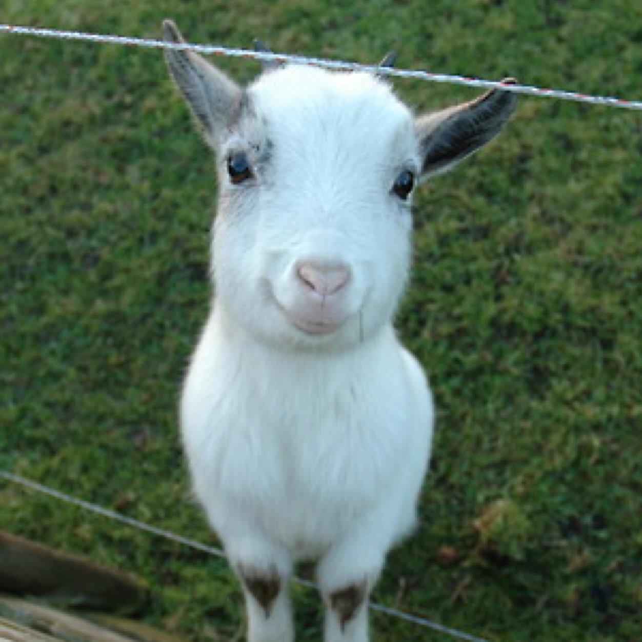 Язык картинках, картинки с надписью ты коза