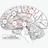 neuroconscience retweeted this