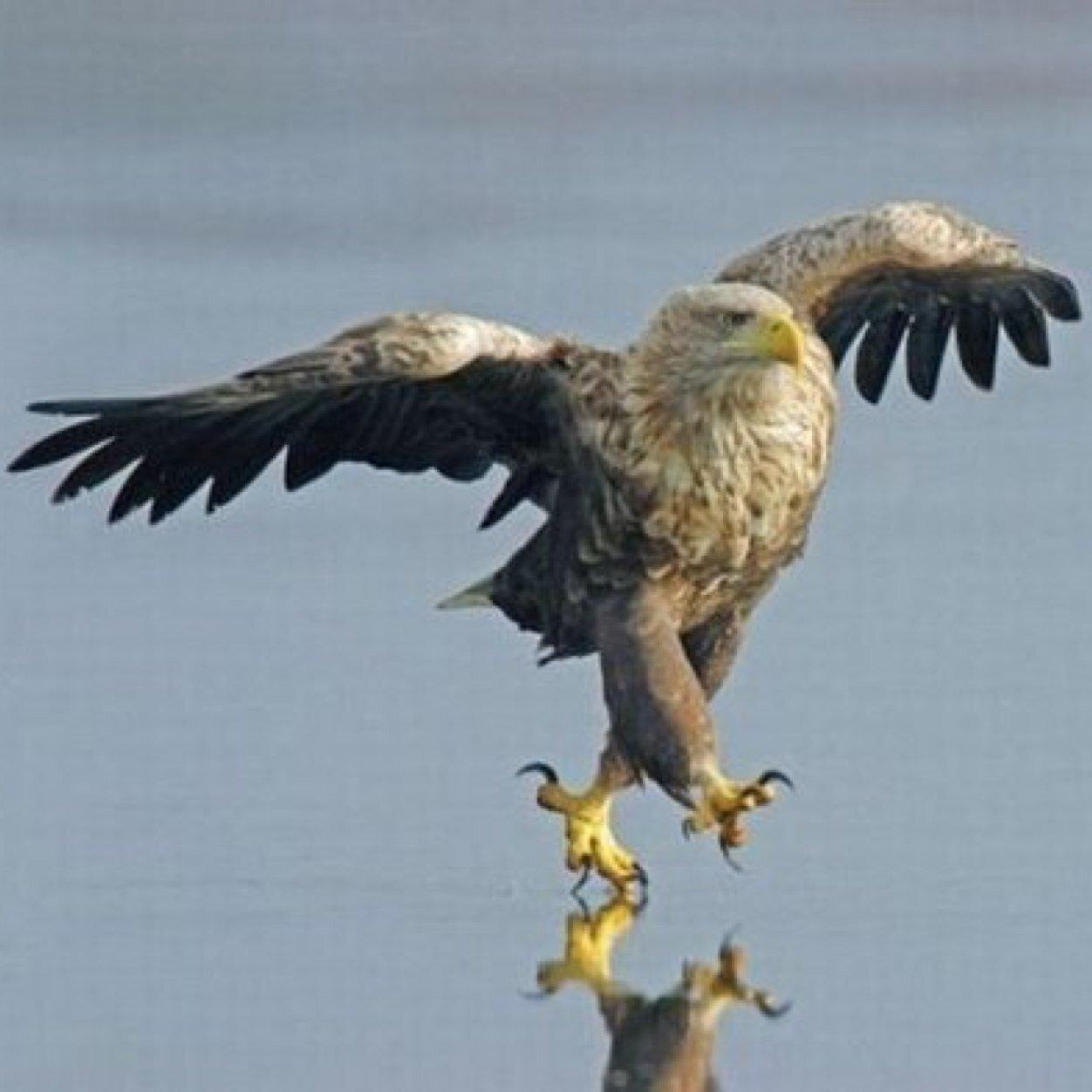 Profile photo of unique_birdy