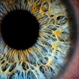 The Floating Eyeball