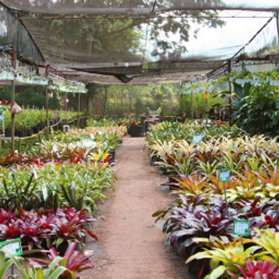 Byron Pike Nursery
