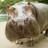 The profile image of kudanshi