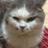 ポンプマン@鉄血の一匹狼な野良猫㌠