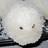 shari_ng's avatar