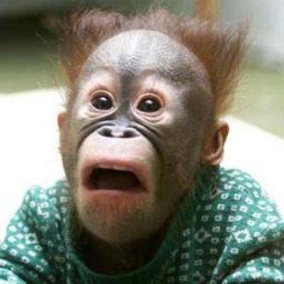 とぼけた顔のチンパンジーの爆笑画像