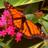RubyChan228's avatar