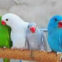 berry (@0533054339) Twitter