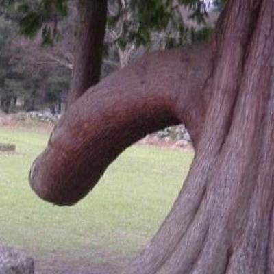 Name Penis 104