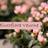Euroflora Veurne